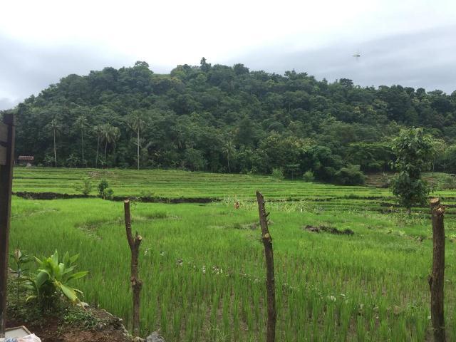 pemandangan hijau